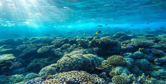 آیا حیات برای اولین بار در اقیانوسها شکل گرفته است؟