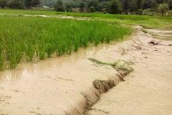 معاون شرکت مهندسی آبفا کشور مطرح کرد: خسارت 1200 میلیاردی شبکه توزیع آب کشور بر اثر سیل