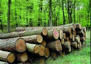 کشف ۱۴ تن چوب قاچاق در ملایر