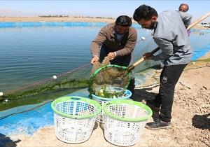 فعالیت ۵٠ واحد استخر دو منظوره پرورش ماهی در خاتم