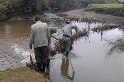 پاکسازی رودخانههای تالش از دامها و سدهای ماهیگیری
