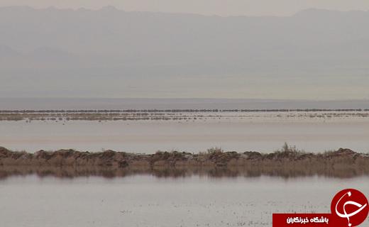 دریاچه نمک قم نفس می کشد+بخشی از حقابه ها از آسمان نازل شدتصاویر