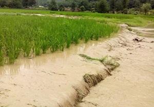 خسارت بیش از ۶۲ میلیارد تومانی به بخش کشاورزی خرمآباد