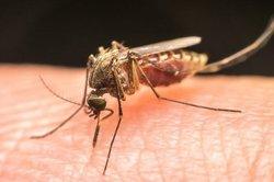 رابطه عجیب تغییرات اقلیمی و افزایش بیماریهای ناشی از نیش پشه