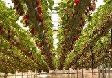 باشگاه خبرنگاران - تولید ۴ هزار تن محصولات گلخانهای در کردستان