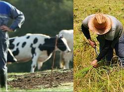 سونامی خودکشی در میان دامداران و کشاورزان/ اینجا افسردگی حکومت میکند! +تصاویر