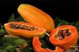 باشگاه خبرنگاران - برداشت میوه گرمسیری چیکو در سیستان و بلوچستان آغاز شد