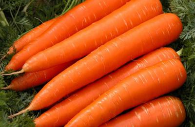 چند خوراکی خوشمزه که جان کلیههایتان را نجات میدهد/ راهکارهایی که مغزتان را جوان نگه میدارد/ فواید استفاده از خوراکیهای پروبیوتیک/ با خوردن هویج لاغر شوید