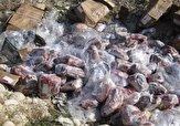 باشگاه خبرنگاران -بیش از ۶۰۰ کیلو گرم گوشت گوسفندی فاسد در ایرانشهر معدوم شد