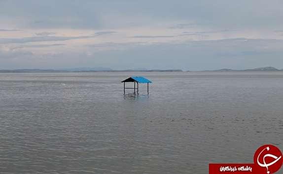 باشگاه خبرنگاران - صدای پای امید در دریاچه ارومیه شنیده شد