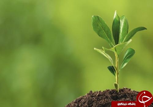 معرفی و بررسی رشته گیاه پزشکی +تواناییهای لازم و بازار کار
