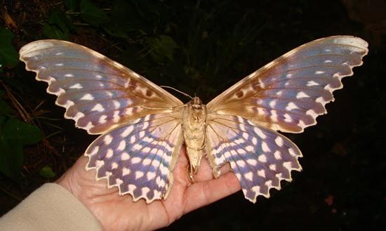 حشرات ترسناکی که از روبرو شدن با آن ها وحشت زده می شوید!