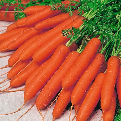 مصرف هویج پخته