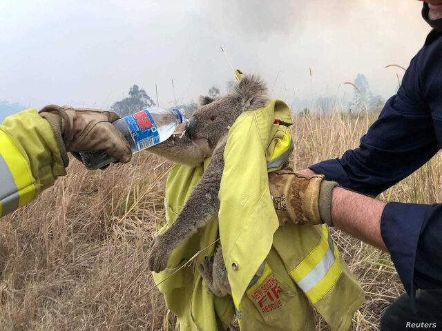 دلیل آتشسوزیهای استرالیا چیست؟
