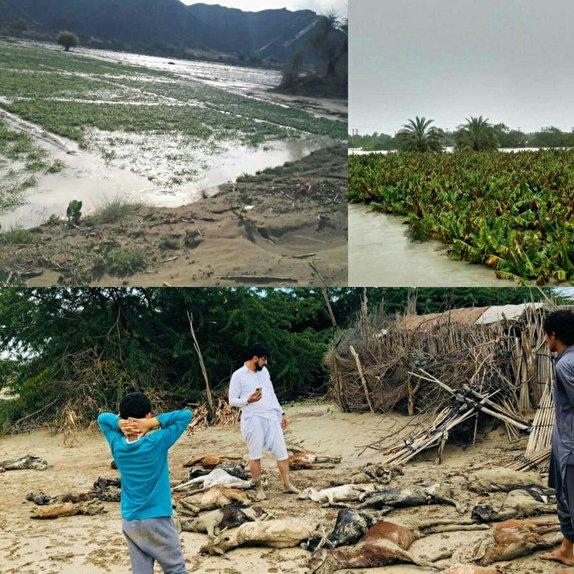 آخرین وضعیت از خسات های  به جا مانده از سیل/ضرورت تامین نیازهای فوری سیل زدگان سیستان و بلوچستان