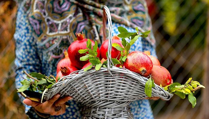 مصرف یک عدد از این میوه معادل مصرف ۱۱ میوه به صورت یکجاست