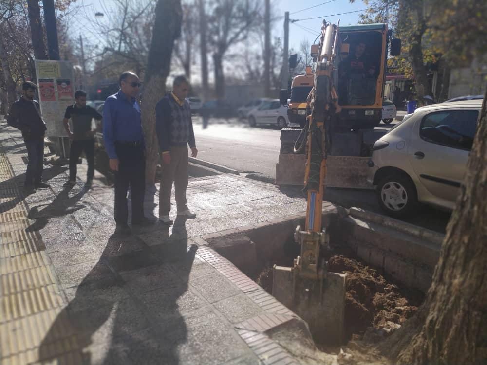کاشت بیش از ۱۱ هزار اصله درخت در معابر شهرداری منطقه یک