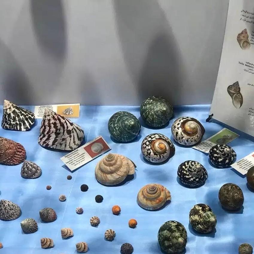 اولین موزه تخصصی صدفها وحلزونهای دریایی در ایران کجاست؟