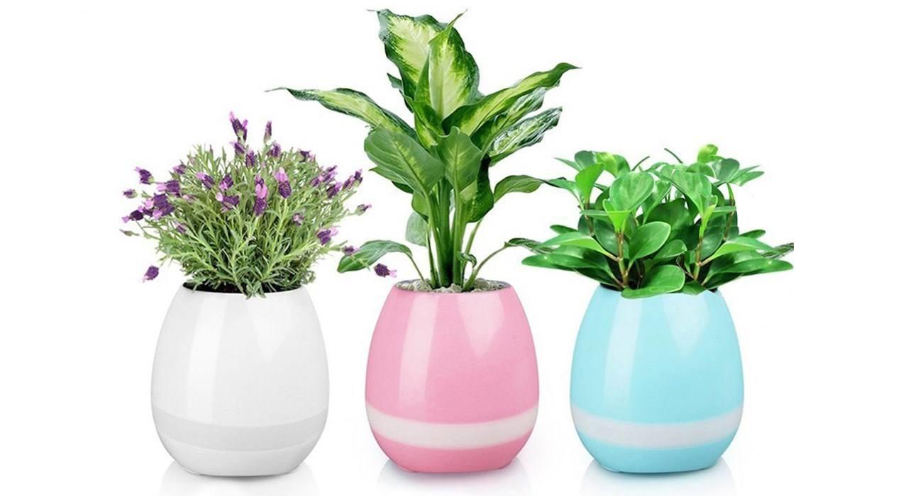 گلدان در رنگ های مختلف چند؟