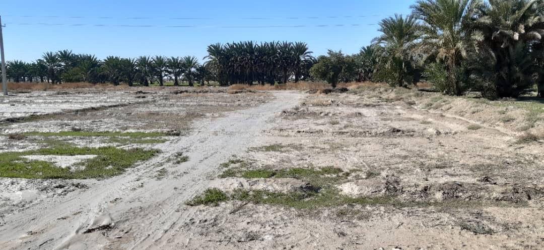 سیل ۶۰۰هکتار اراضی زراعی و باغی شهرستان بمپور را تخریب کرد