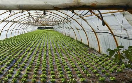 بهرهبرداری ۵۰ درصد سهمیه احداث گلخانه در نهاوند