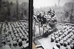 تصاویری از بارش برف در تهران