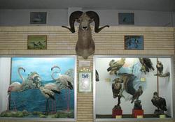 بازدید از موزه تاریخ طبیعی زنجان برای علاقهمندان رایگان شد