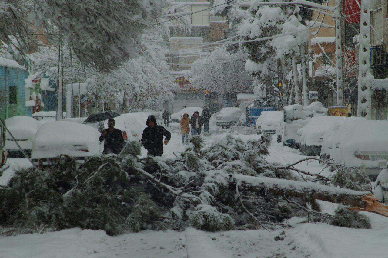 طلب کمک شهروندان برای تکان دادن برف درختان پایتخت/ درختان پایتخت در روز زمستانی نیازمند شهروندان هستند