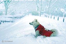 باشگاه خبرنگاران - حیوانات در فصل زمستان