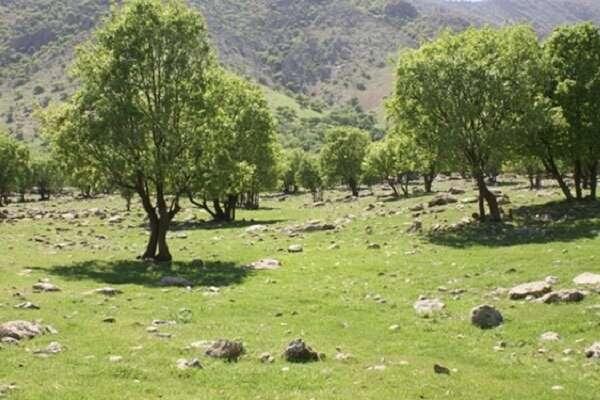 بهره برداری از سه طرح منابع طبیعی در شهرستان تویسرکان