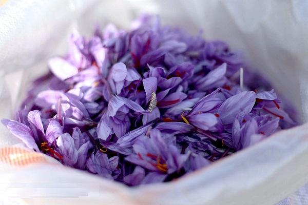 تشخیص دشوار زعفران اصل از تقلبی