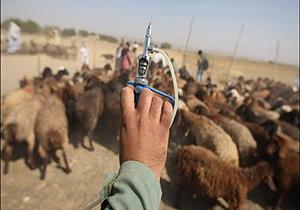 اختصاص ۲۰ میلیارد ریال به واکسیناسیون دام و طیور در ایلام