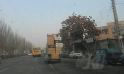 از ورود گرازهای گرسنه به شهر مریوان تا عجیبترین مدل حمل بار که تاکنون دیدهاید! + فیلم و تصاویر