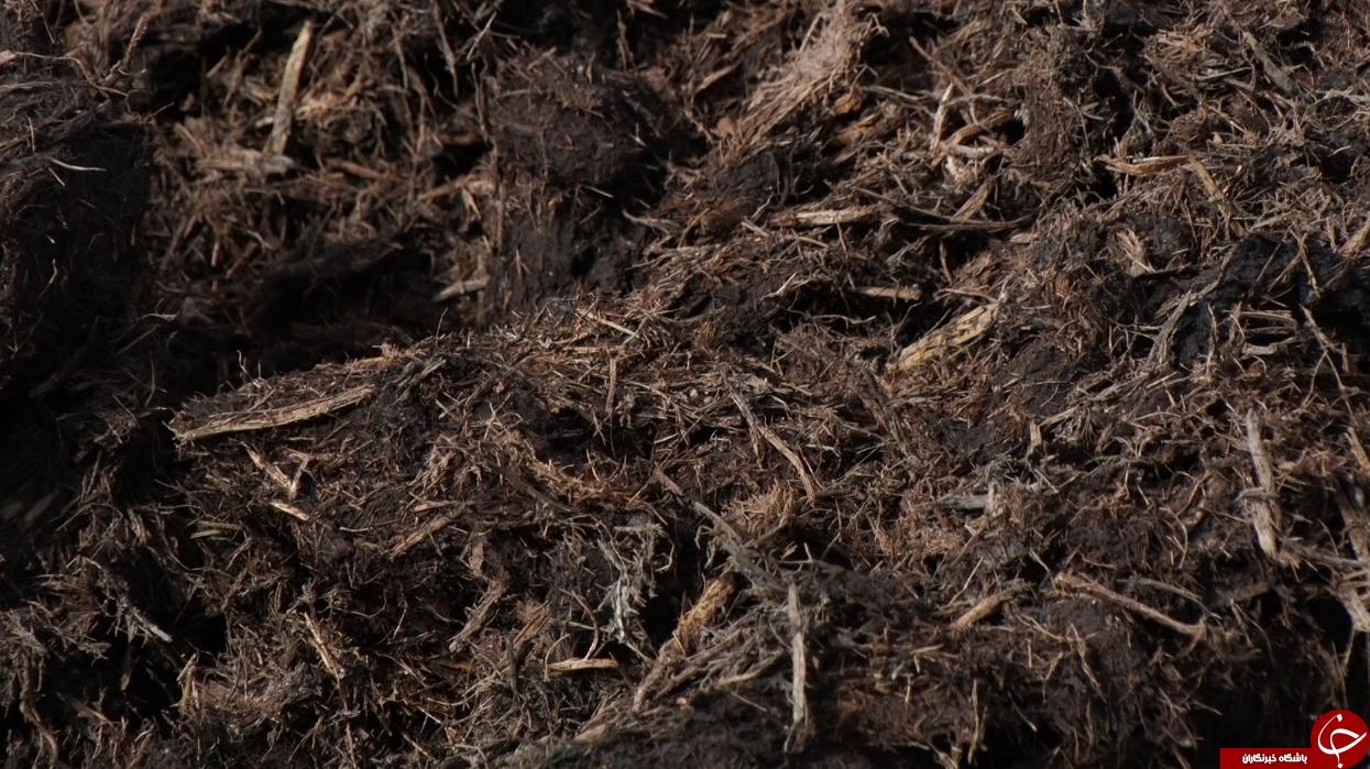 کمپوست ثروتی پنهان در دل گیاهی جادویی+فیلم