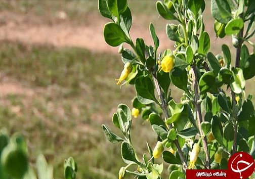 طرحهای آبخیزداری به فریاد طبیعت خوزستان رسیدند