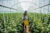 باشگاه خبرنگاران - گلخانه داران مراقب افزایش دما باشند/  مانعی برای سم پاشی مزارع و باغات تا پایان هفته وجود ندارد