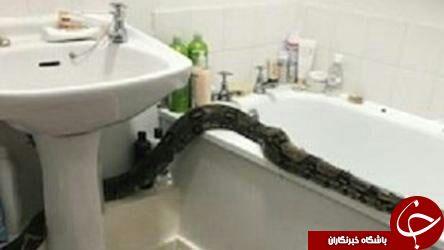 صحنه وحشتناکی که صاحبخانه در حمام با آن روبرو شد
