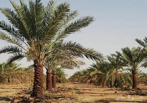 رونق میلیاردی محصولات کشاورزی خوزستان/موفقیت صادرات در گرو ورود بخش خصوصی