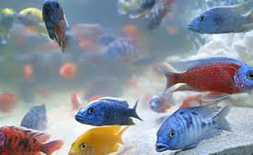خانه شیشهای آبی رنگ اقیانوسی کوچک برای تن پوشان پولکی