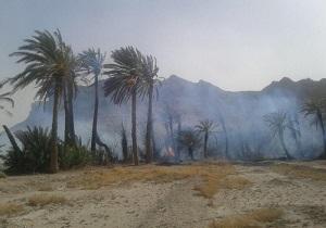 آتش سوزی در نخلستان بندان
