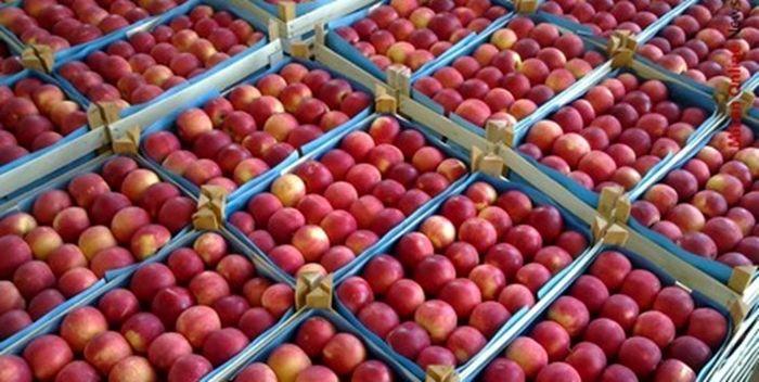 وزارت صمت ۲۵ هزار تن از محصول سیب آذربایجان غربی را خریداری کرده است