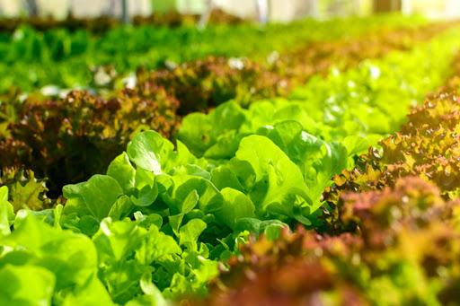 پیش بینی افزایش ۱۰ درصدی تولیدات کشاورزی در ایلام