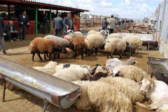 سالانه ۱۶۵ هزار تن فرآوردههای دامی در استان ایلام تولید میشود