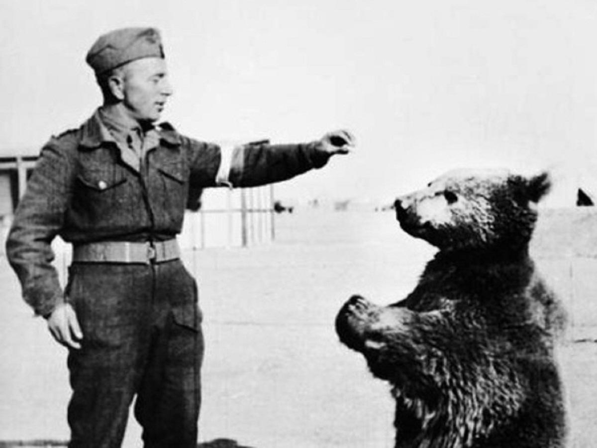 خرسی از کوه های البرز که در جنگ جهانی دوم علیه نازی ها جنگید