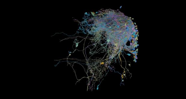 نقشهبرداری سه بعدی گوگل از مغز کرم