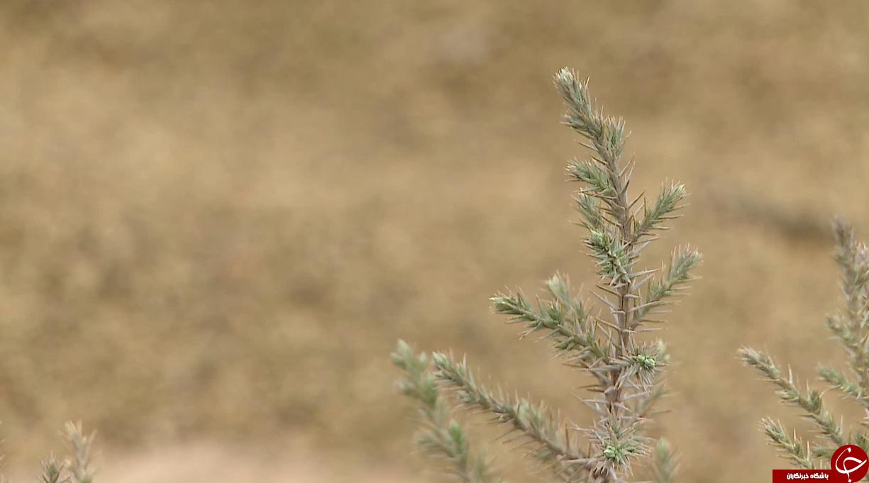 بزرگترین نهالستان شمالغرب کشور خزانهای پربار برای حفظ پوشش جنگلی