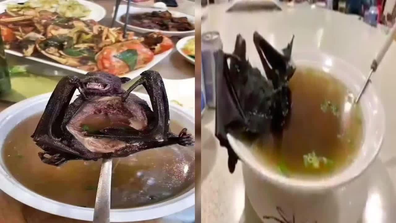 منشاء ویروس کرونا؛ از سوپ خفاش و مار تا توله گرگ و غذای دریایی