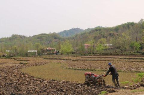 شخم زمستانه اراضی کشاورزی گیلان و تاثیرآن در افزایش محصول برنج، حاصل خیزی خاک و کاهش مصرف آب