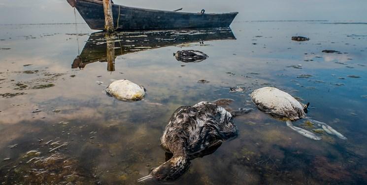 ممنوع شدن شکار پرندگان در ۲ استان شمالی