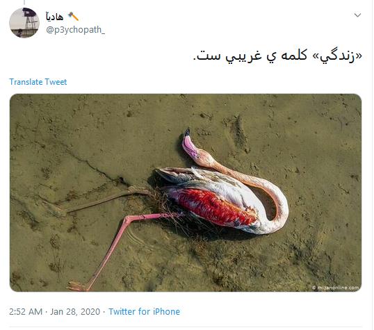 تاسف کاربران به مرگ دلخراش ۵۹۰۰ قطعه پرنده مهاجر در تالاب میانکاله #میانکاله
